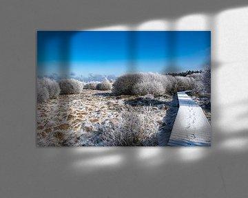 Winter in de Hoge Venen