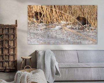 Winterse waterral(len) van Ard Jan Grimbergen