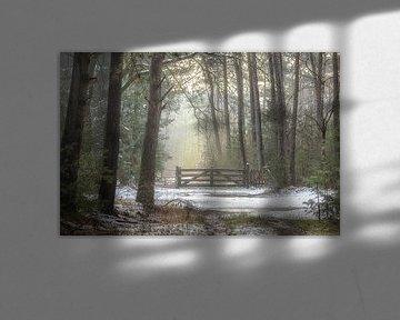 Smeltende sneeuw in de Laurabossen van Peschen Photography