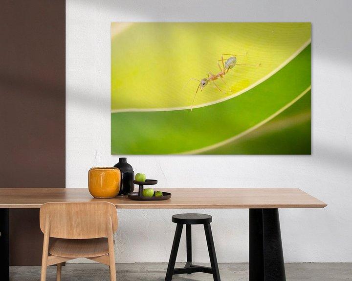Sfeerimpressie: De weefmier op een blad in Australië van Sven Wildschut
