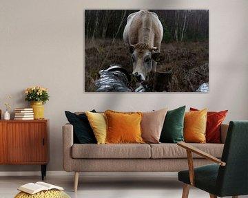 Kuh im Naturgebiet von Tina Linssen