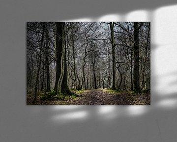 De mystiek van kale bomen van Tina Linssen