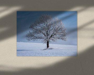 eenzame boom in een winterlandschap van Animaflora PicsStock