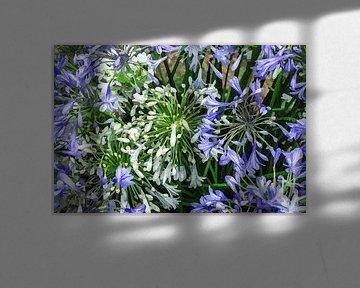 Digi gemalt Blumen 01 von Hans Levendig (lev&dig fotografie)