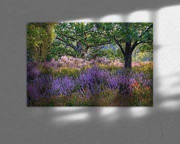 Lüneburger Heide zur Heideblüte von Katrin May