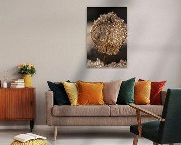 Lantaarnbloem van Thomas Heitz