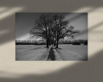Bomen in de winter van Wytze Plantenga
