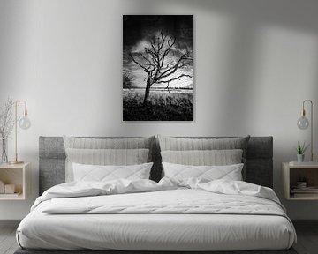 Baum von Wim de Vos