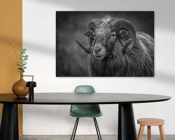 Schaf mit gelockten Hörnern in Schwarz und Weiß von ingrid schot