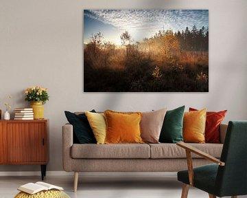 Autumn sunlight van Olha Rohulya
