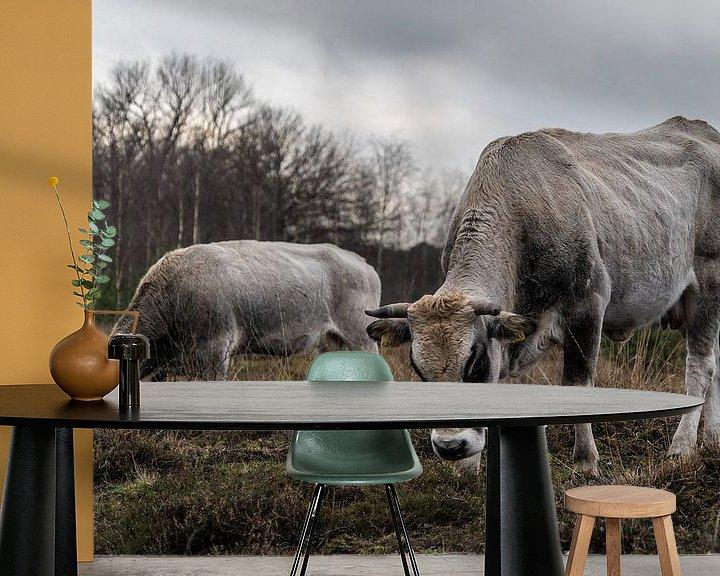 Beispiel fototapete: Kühe im Wintermoor vergasen von Tina Linssen