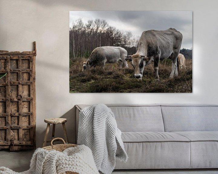 Beispiel: Kühe im Wintermoor vergasen von Tina Linssen