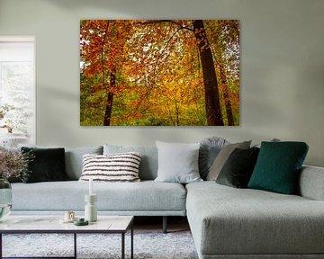 Herfstkleuren van Sharon Hendriks