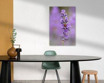 Lavendel von Wanda Michielsen
