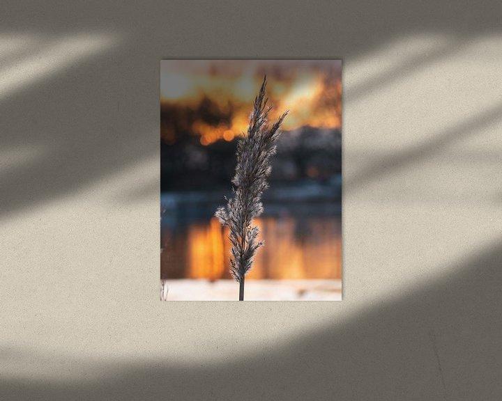 Sfeerimpressie: Riet pluim bij zonsondergang van Matthijs Noordeloos