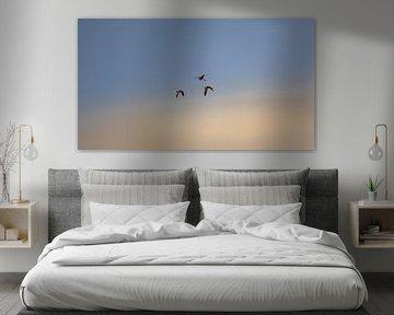 Vliegende vogels in de lucht in Walcheren van Percy's fotografie