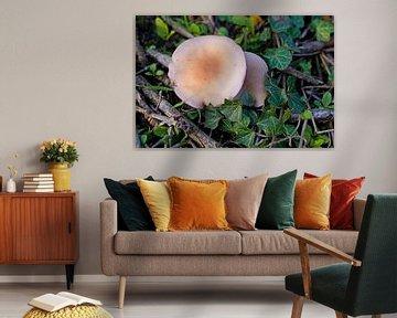 Paddestoel in de herfst in Duitsland en kleurrijke bladeren van Babetts Bildergalerie