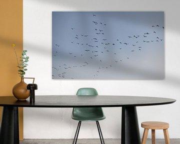 Des oiseaux survolent Walcheren 2 sur Percy's fotografie