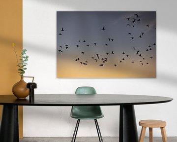 Vogels vliegen tijdens de zonsopkomst van Percy's fotografie