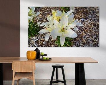Blumen in freier Wildbahn auf einer Rundreise in Großbritannien von Babetts Bildergalerie
