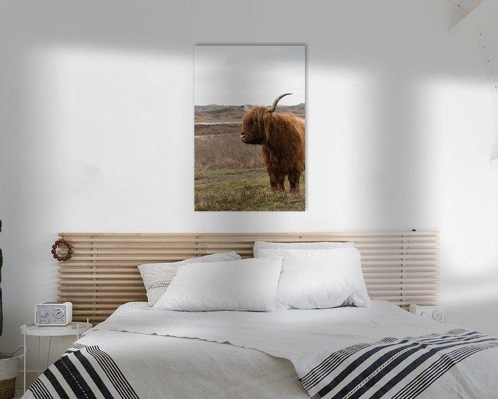 Sfeerimpressie: Schotse Hooglander op Texel van Dick Carlier