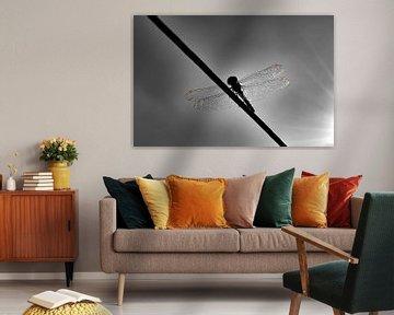 Libelle schwarz und weiß von Loutje fotografie & styling