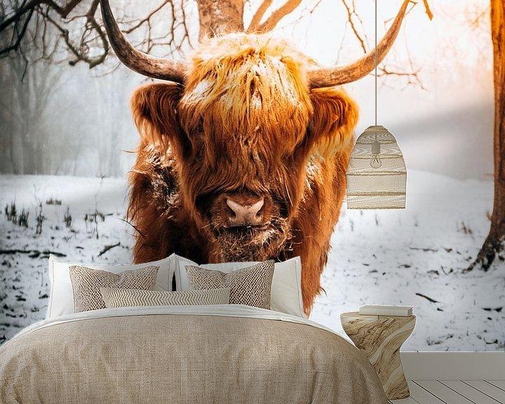 Sfeerimpressie behang: Schotse Hooglander eet hooi in de sneeuw van Marion Stoffels