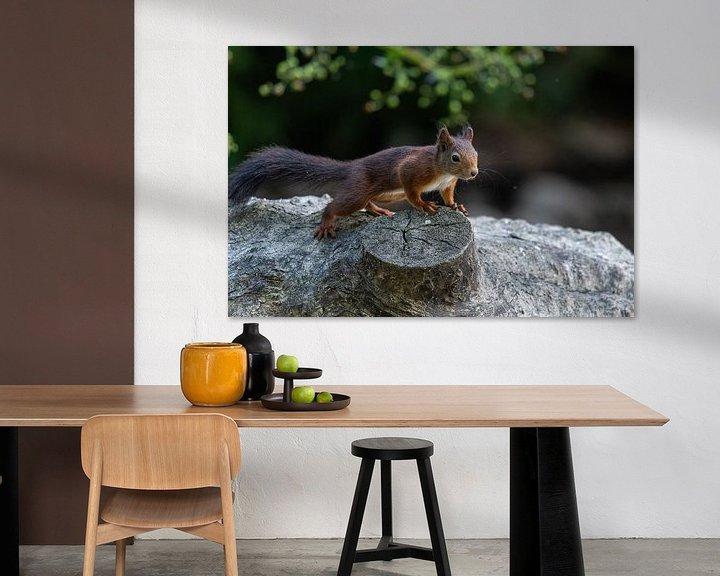Beispiel: Eichhörnchen von Robbie Nijman