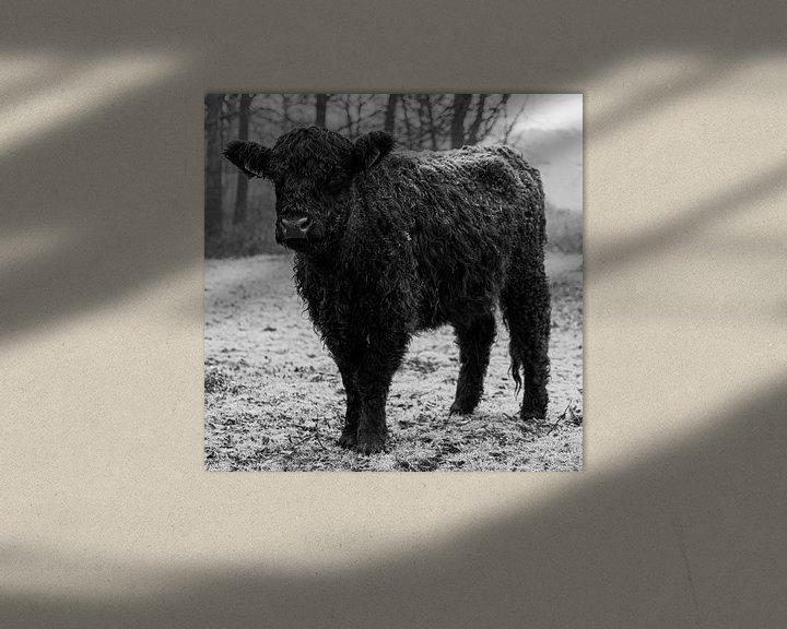 Sfeerimpressie: galloway in zwart wit van scott van maurik