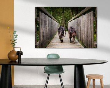 Beste Freunde | Zwei Border Collies laufen über eine Holzbrücke von Pieter Bezuijen