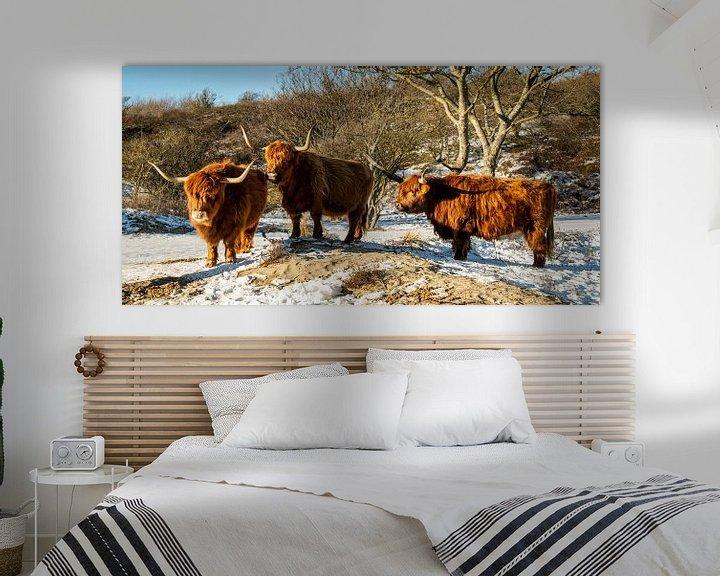 Sfeerimpressie: Drie Schotse hooglanders staan rustig in de sneeuw. van MICHEL WETTSTEIN