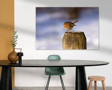 Een roodborstje op een paaltje van JWB Fotografie