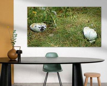 zerbrochene Eierschalen von Babetts Bildergalerie