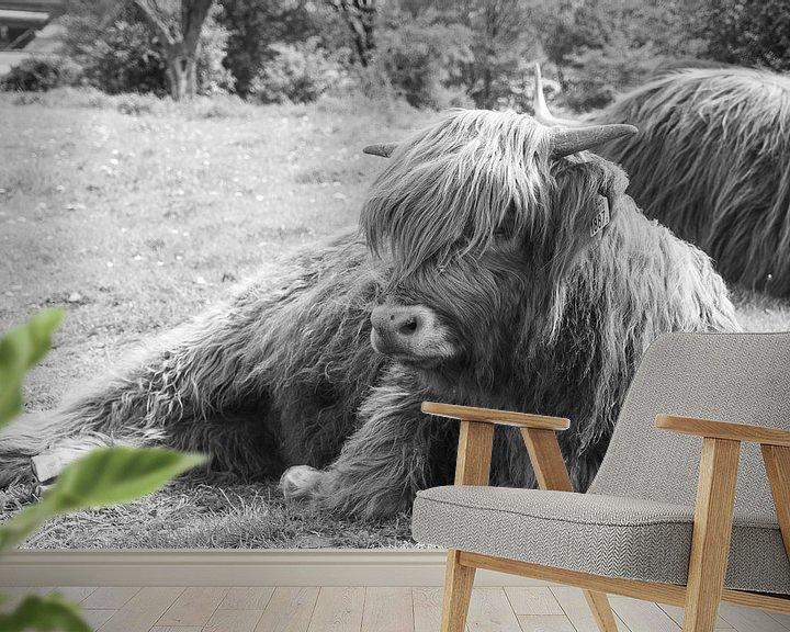 Beispiel fototapete: Schottischer Highlander im Gras liegend von Tina Linssen