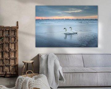 Zwanen in het ijs (winter 2021) van Rossum-Fotografie