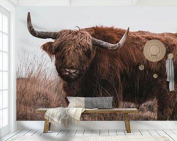 Schotse Hooglander van BY MEAGAN