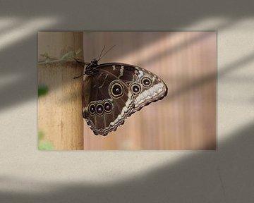 Schmetterling von Tineke Mols