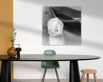 tulp in zwart wit van Klaartje Majoor