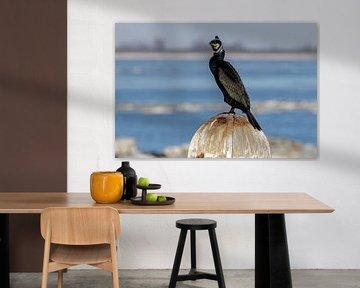 Der Kormoran, Phalacrocorax carbo von Anjo ten Kate