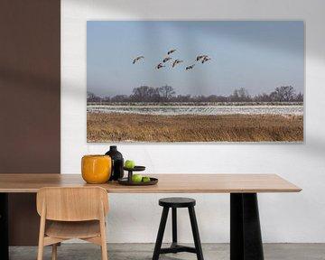 Een koppel Grauwe ganzen van JWB Fotografie