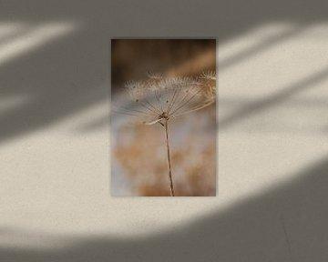 Winter Blume Natur von Amber den Oudsten