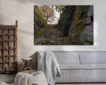 Felswand mit Efeu in Halle Saale in Deutschland von Babetts Bildergalerie
