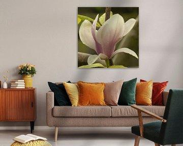 Magnolia bloem von Bargo Kunst