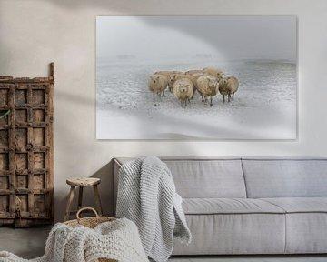 Des moutons dans une tempête de neige sur Jaap Terpstra