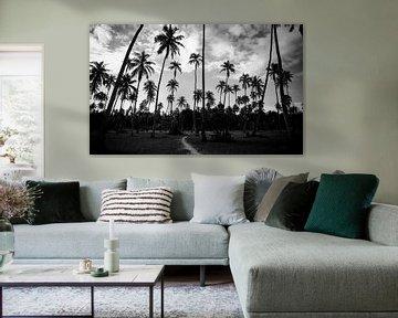 Palmen Kontrast in Französisch-Polynesien - Schwarz-Weiß-Reisefotografie von Freya Broos