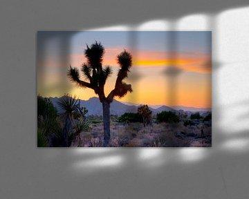 LP 71318924 Joshua Tree Nationaal park Californië van BeeldigBeeld Food & Lifestyle