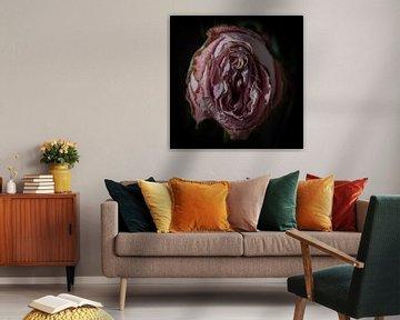 Verlepte roze roos van Ton van Waard - Pro-Moois