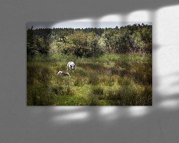 Twee runderen in een natuurlijk weiland