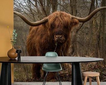 Etende Schotse Hooglander stier met grote horens. van Wendy de Waal