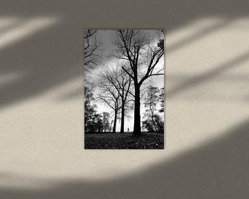Hoge bomen van Bob Bleeker